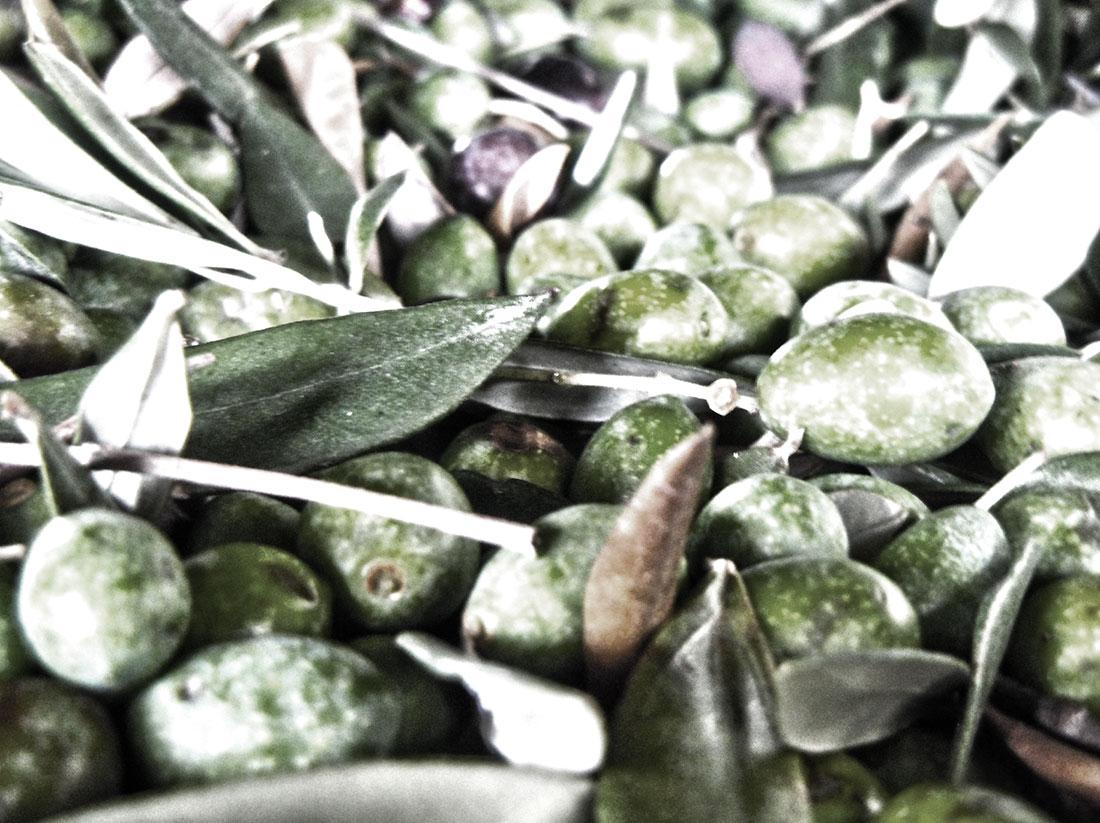 vellutodolio_olive1